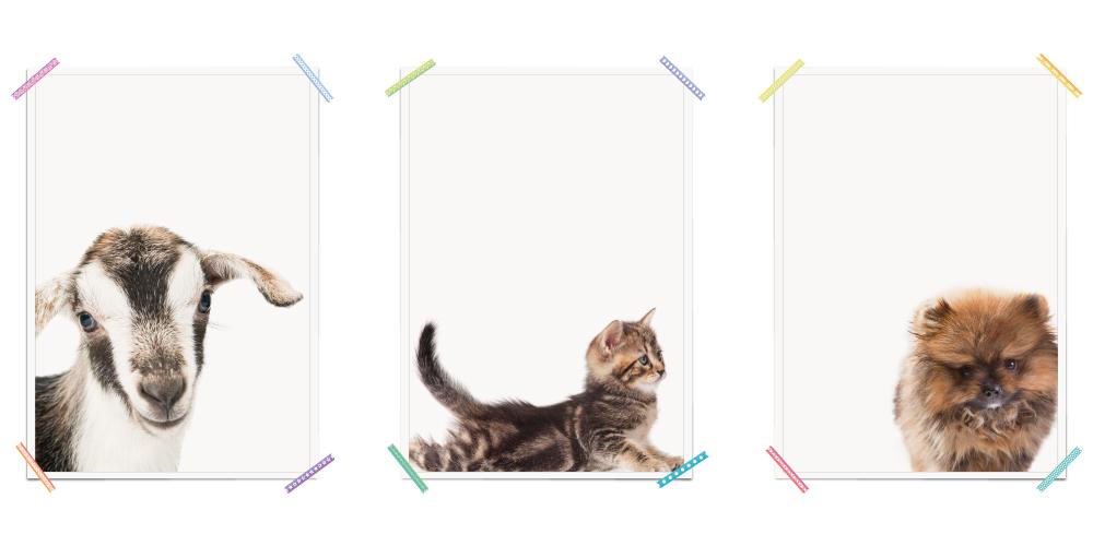 Ziege Katze Hund Bauernhoftiere Haustiere Poster Kinderzimmer Haustiere Poster Kinderzimmer Nutztiere