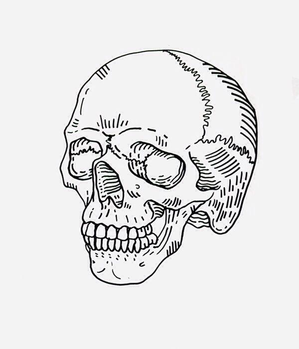 Skull Drawing Minimal Google Search Skull Illustration Skull Sketch Art