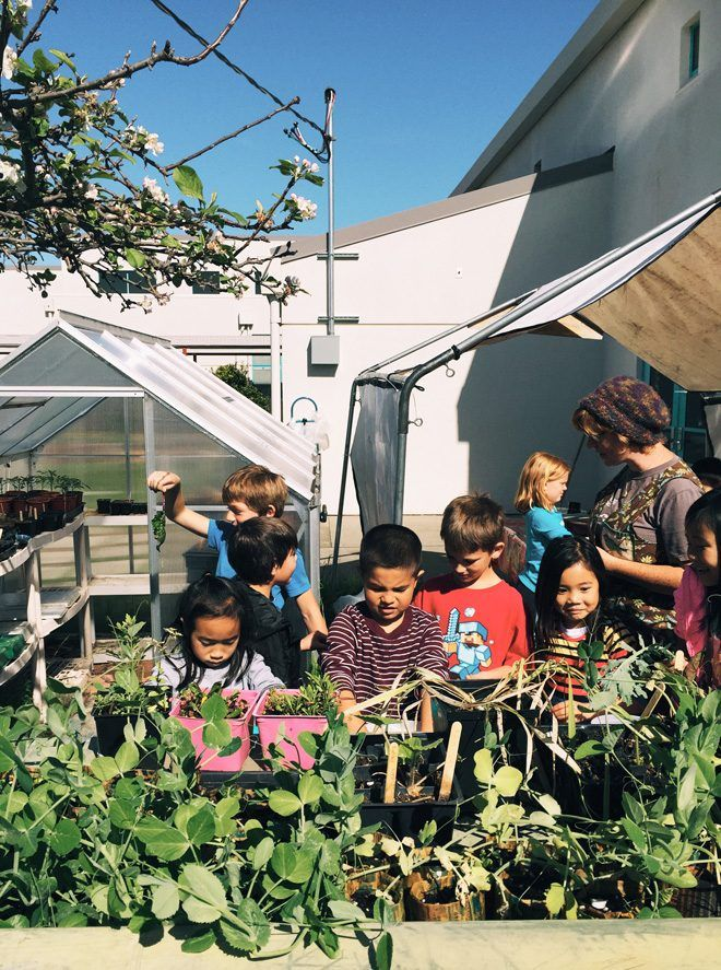 Hands on help from second graders at Bay Farm School. Photo: Ethan Bodnar