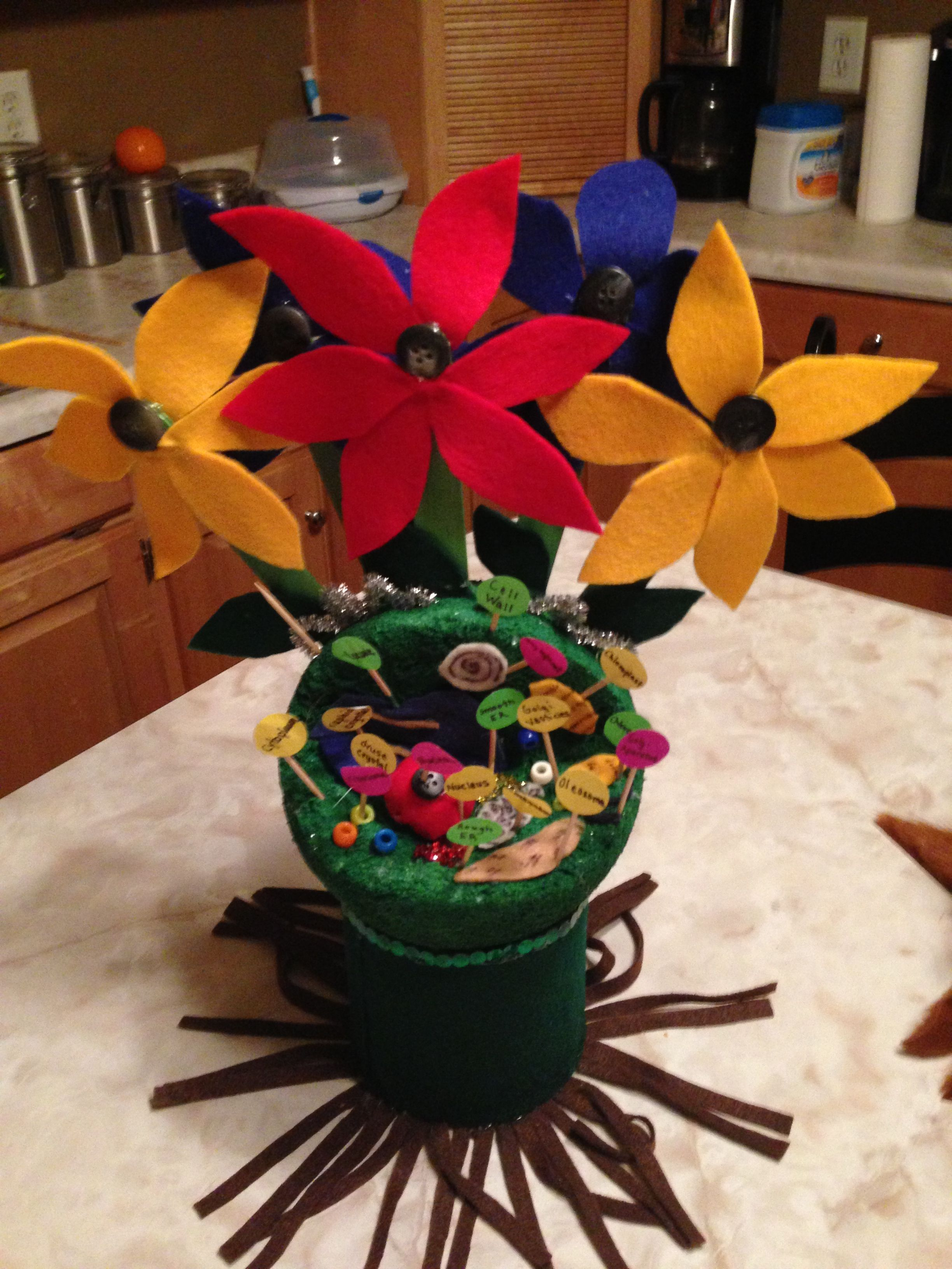 Bennett! Plant Cell Project   Cells project, Plant cell ...