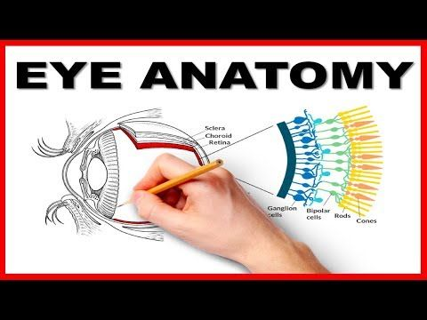 Eye Anatomy and Function - Made Easy - YouTube | video eyes ...