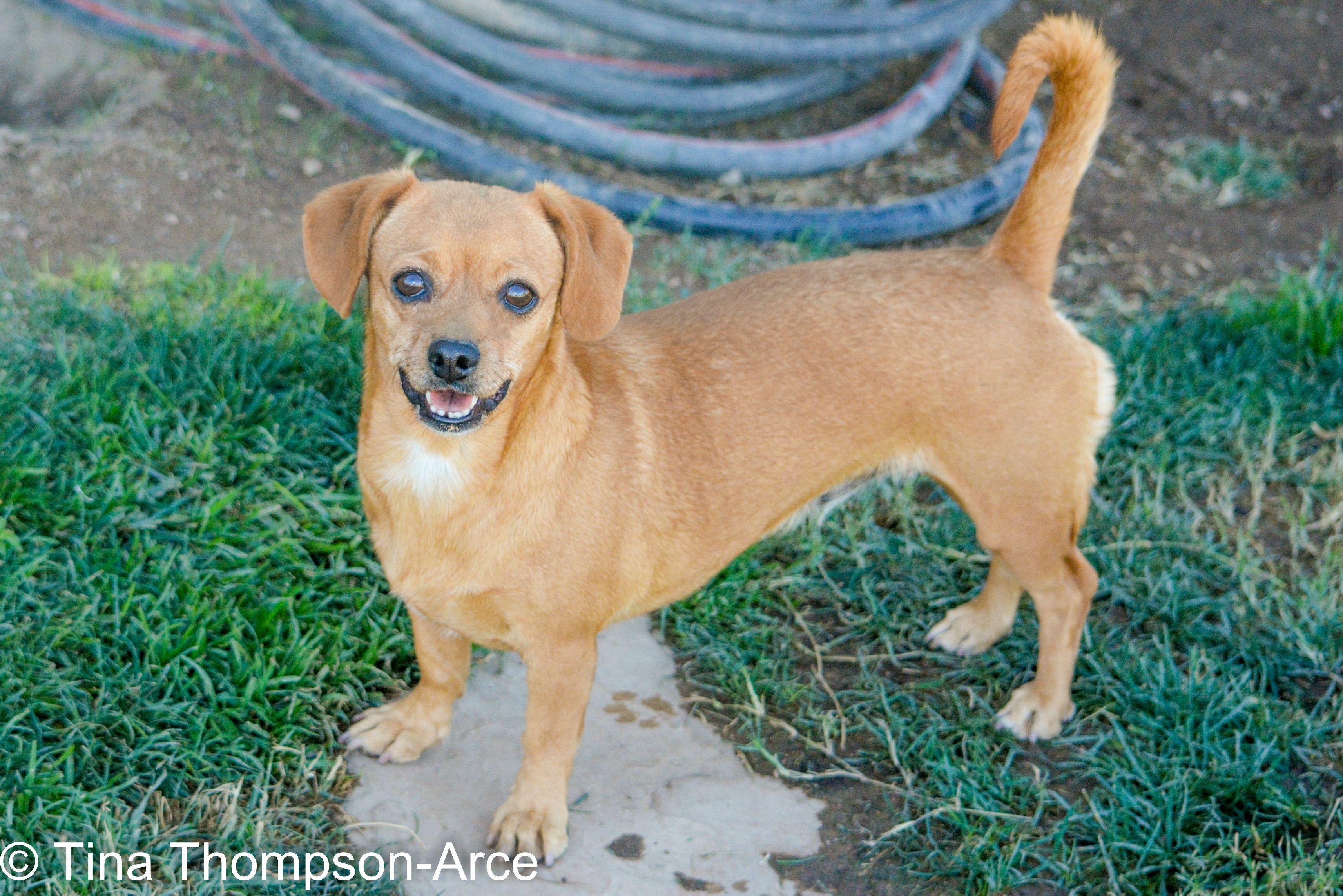 Daug Dog For Adoption In Hesperia Ca Adn 698072 On Puppyfinder
