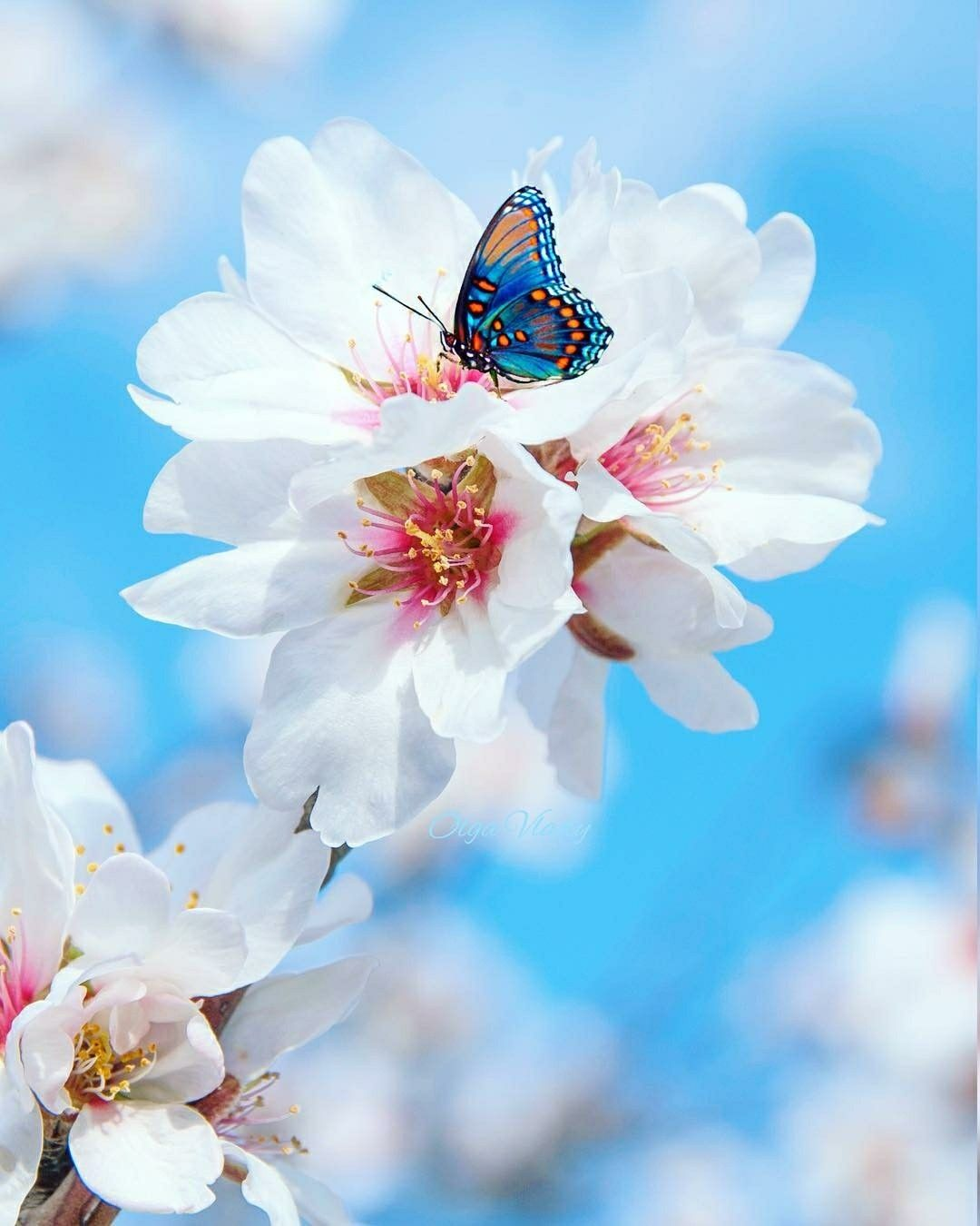 The Beauty Of Nature Funny Cute Natural Beauty Nature