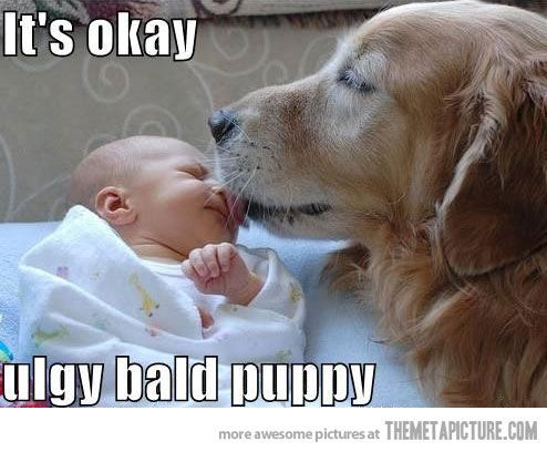 Bald Puppy Funny Dog Pictures Cute Animals Funny Animals