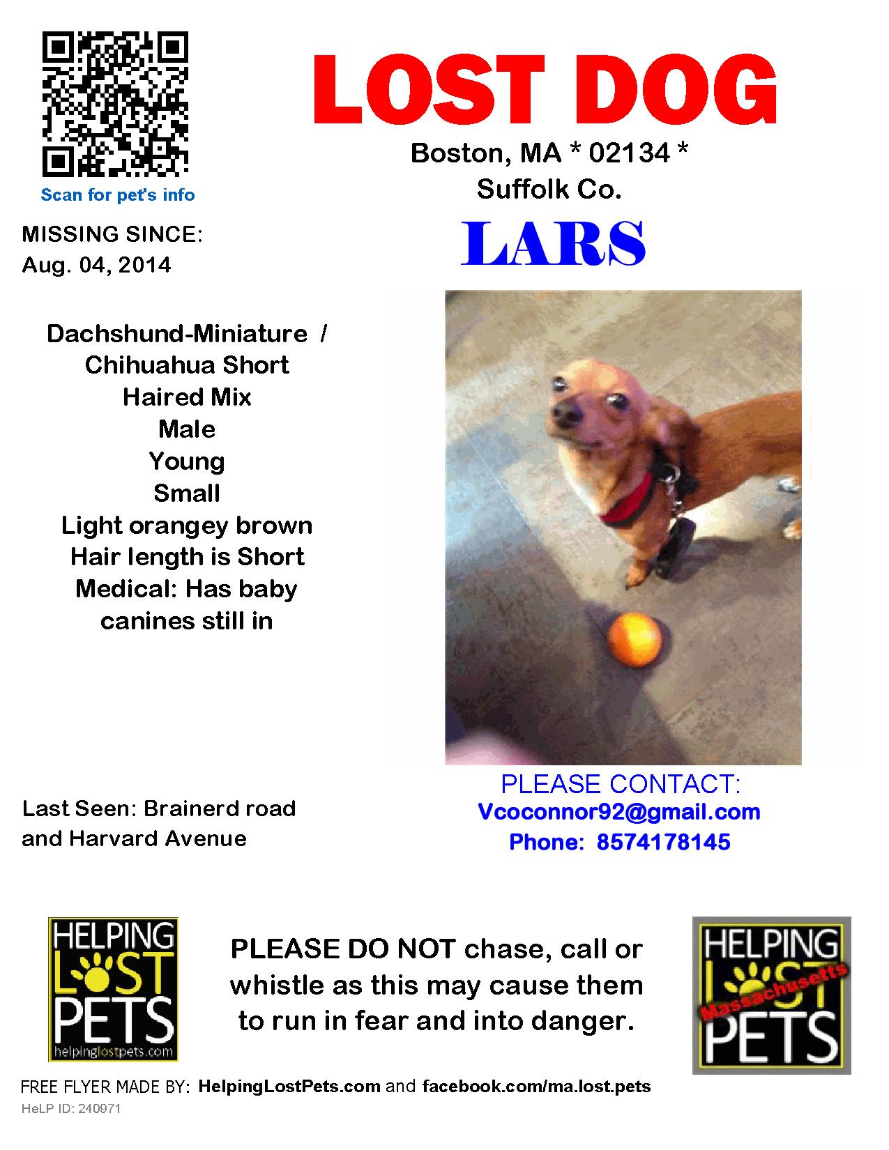 Lost Dog Dachshund Miniature Boston Ma United States