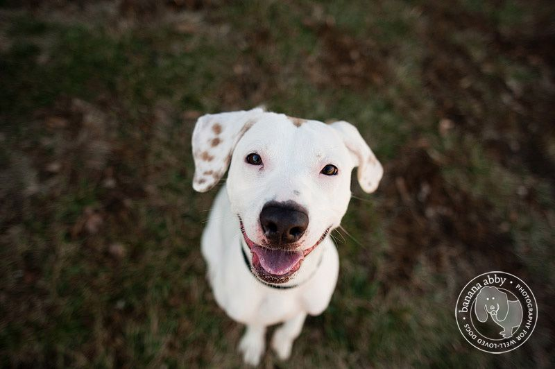 def. Woodie, jackrussell/lab mix.  This is not Woodie just a look a like.