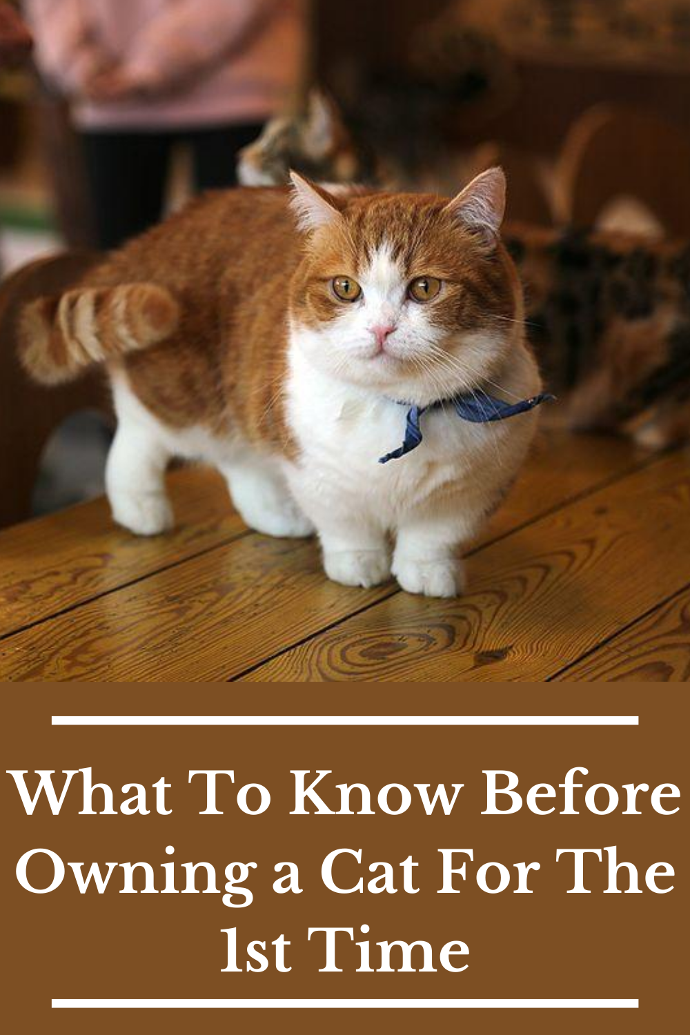 10 Rules To Follow If You Are Owning A Cat In 2020 Cats Owning A Cat First Time Cat Owner