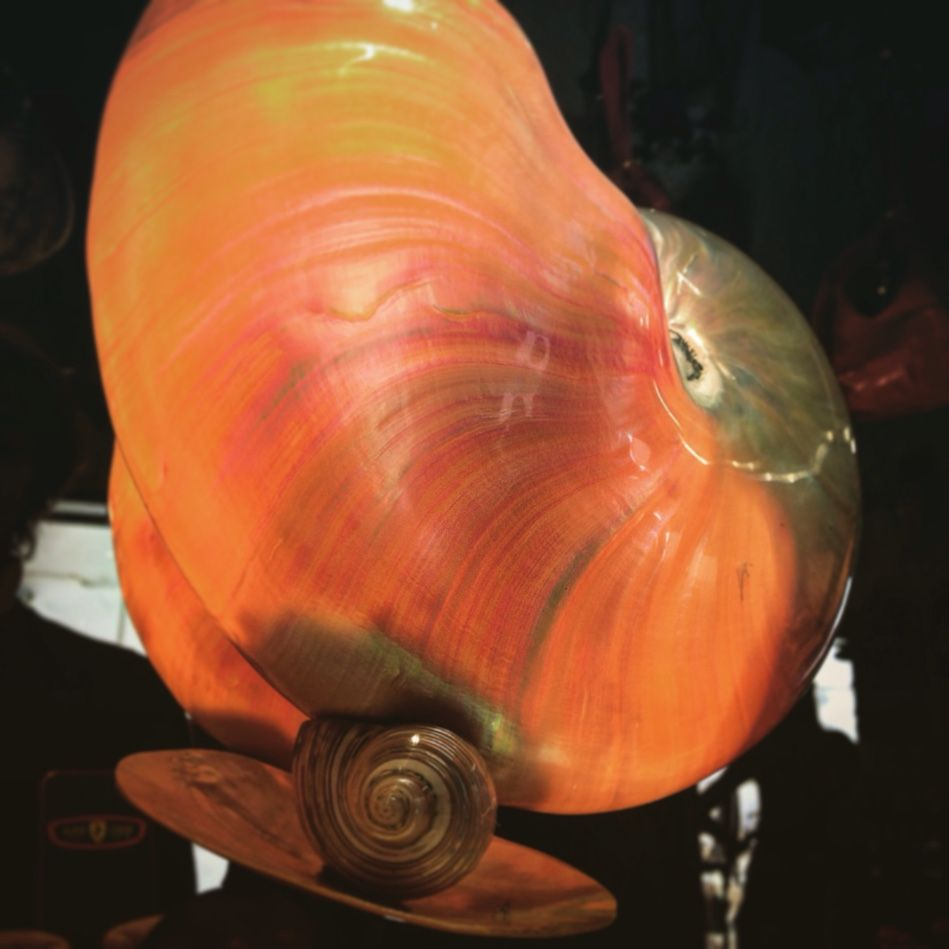 Lampada con conchiglia nautilus madre perla disegnata by Salamastra  ---  Nautilus shell lamp with mother-of-pearl finish.