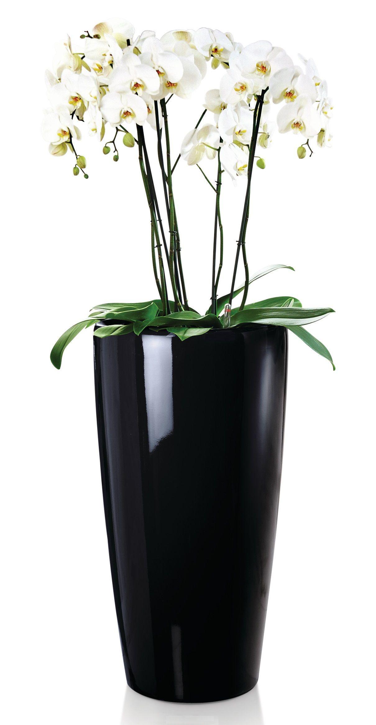 Correze Comtemporary Sleek Black Planter With Orchid