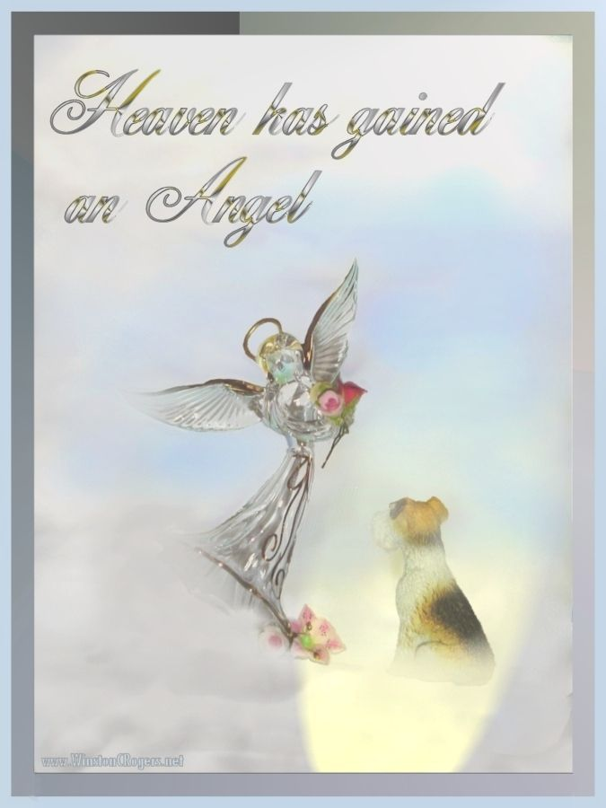 Heaven Has Gained An Angel Pet Loss Poem Pet Loss Pet Loss Grief