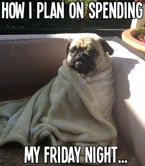 How I Spend Friday Nights Funny Cute Animals Winter Adorable Dog
