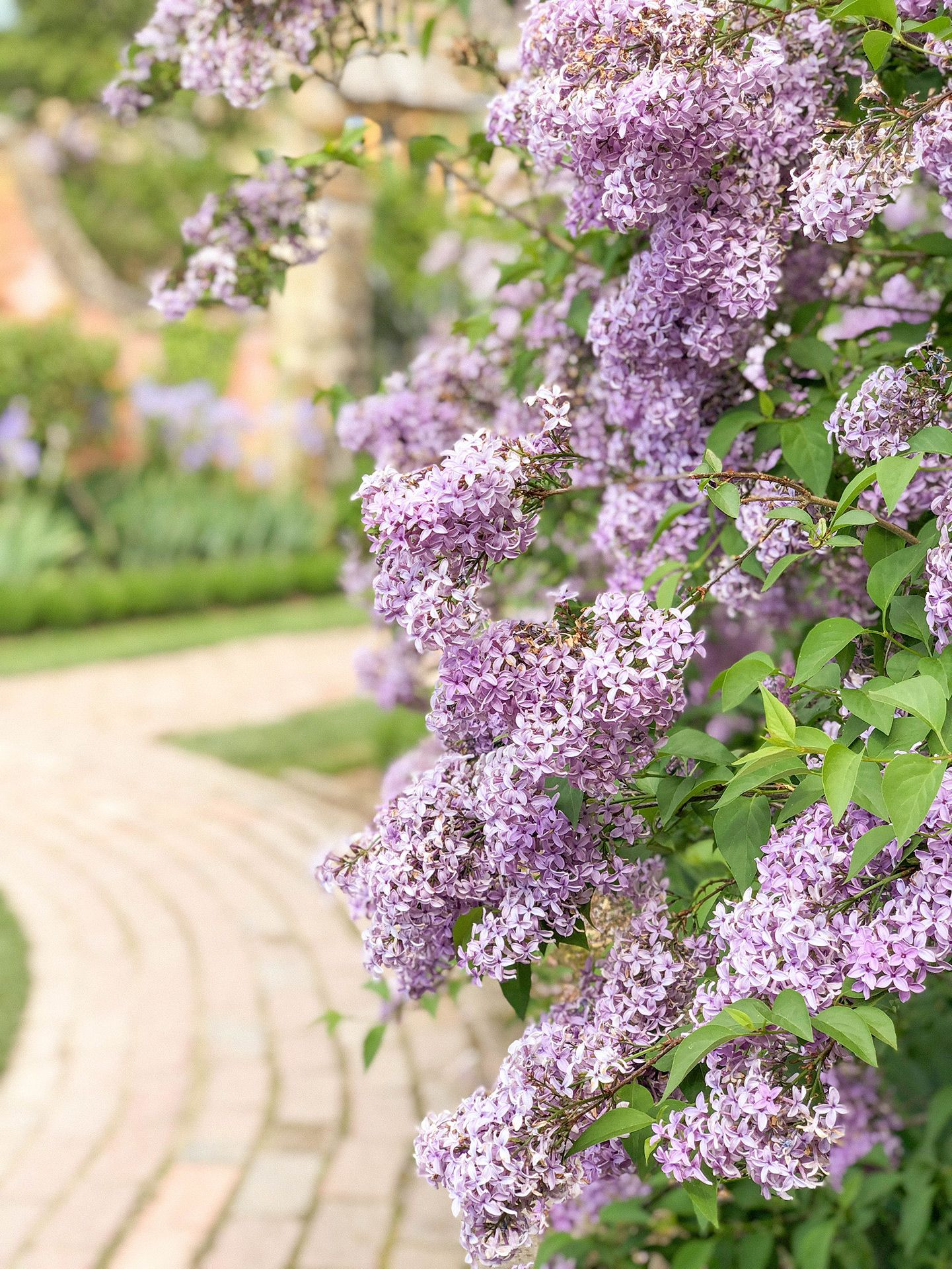 5 Things To Know Before You Go Cotswolds Garden Inspiration Cotswolds England