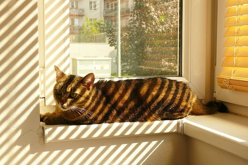 ru_cats_daily: красивая