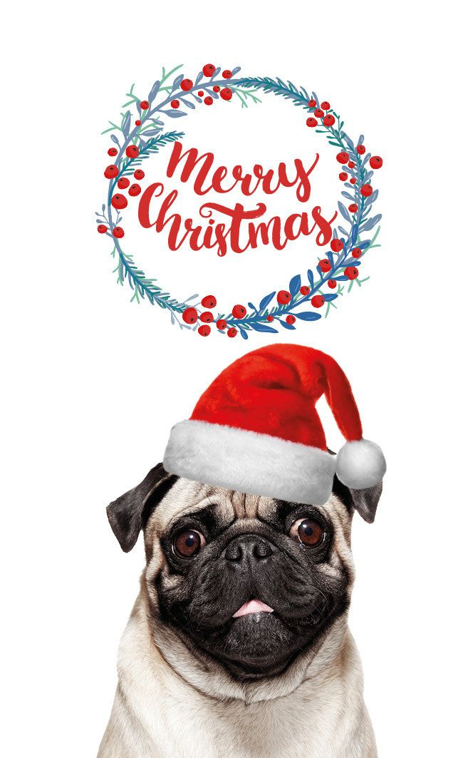 Pug Christmas Cards.5 Pack Pugmas Pug Christmas Cards Pack Of 5 With Printed Matching