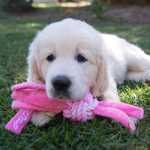 Home Shop Dogs Toys Squeekies Rogz Puppy Cowboyz Pet Toys Pets Dogs