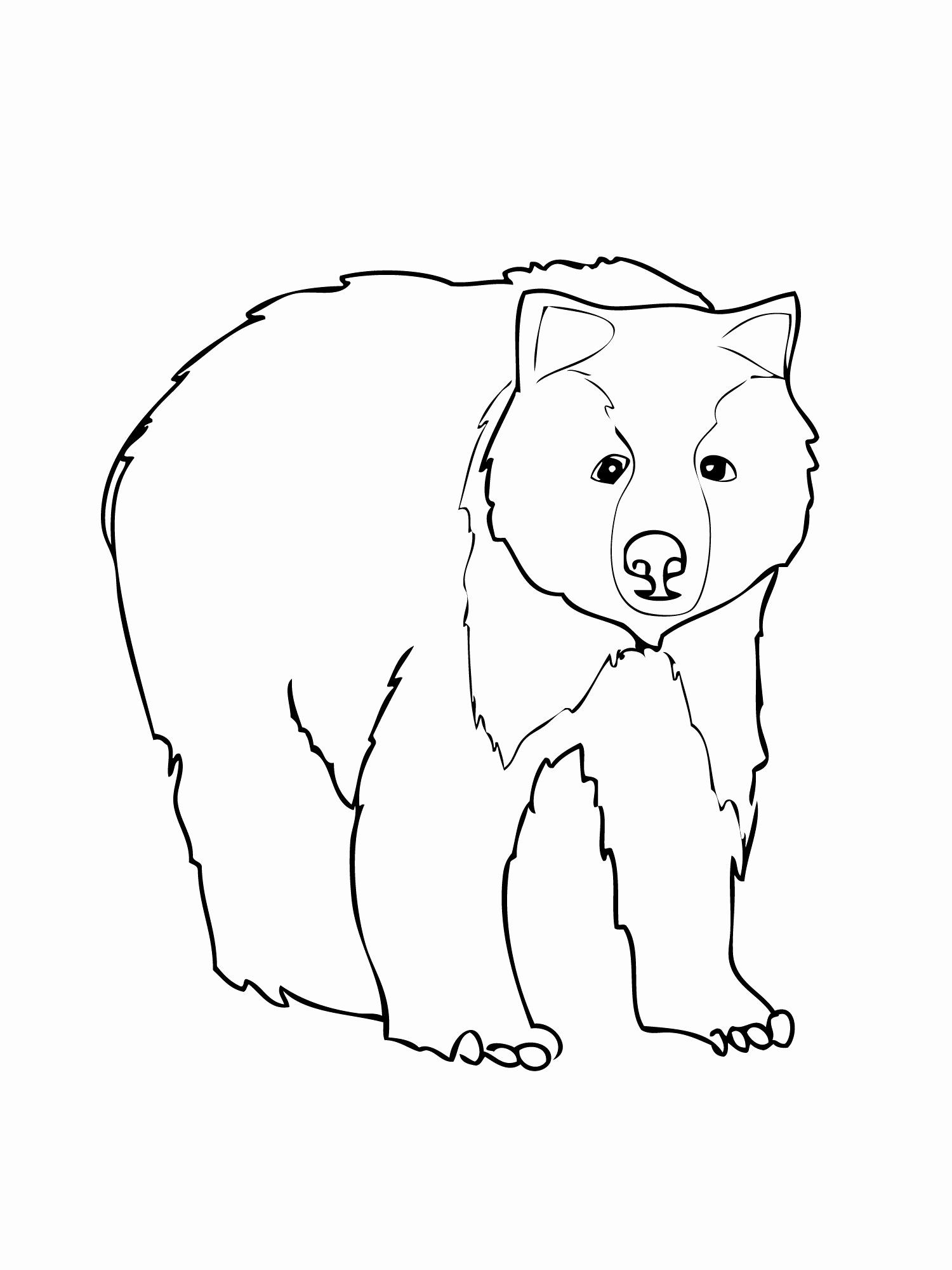 Bear Coloring Pages For Kids Beautiful Black Bear Coloring Pages