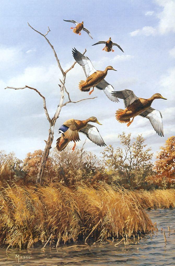 картинки для декупажа утки охота за сокровищами
