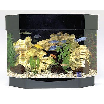 Seaclear 10 Gal Flat Back Hexagon Mini Kit Acrylic Aquarium 23 By 11 19 5