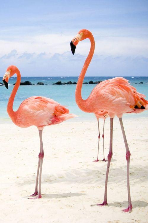 Flamingo casino animals biloxi casinos clubs