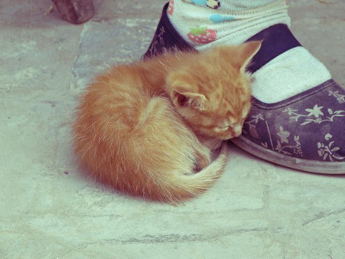 Cat 3 By Youxiandaxia On Deviantart Sleeping Kitten Kittens