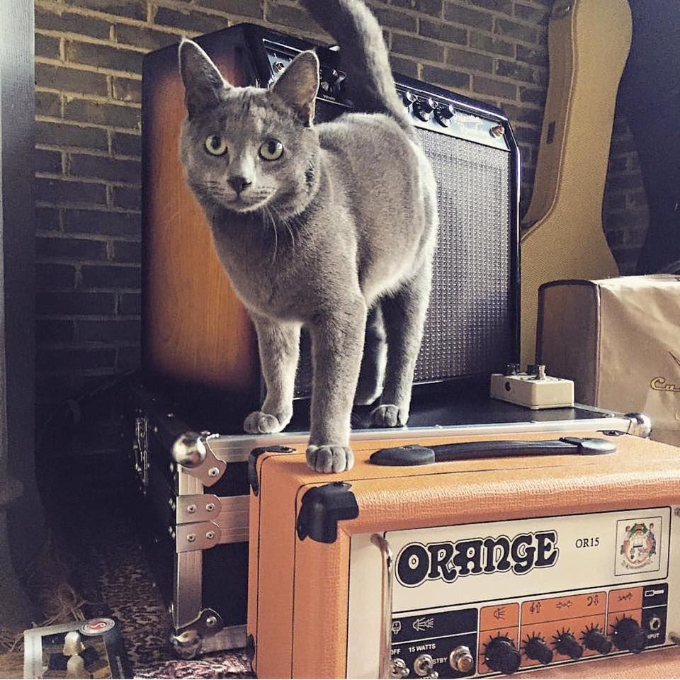 КОТКИ ВЪРХУ УСИЛВАТЕЛИ какво ново GoGuide Cats Pinterest