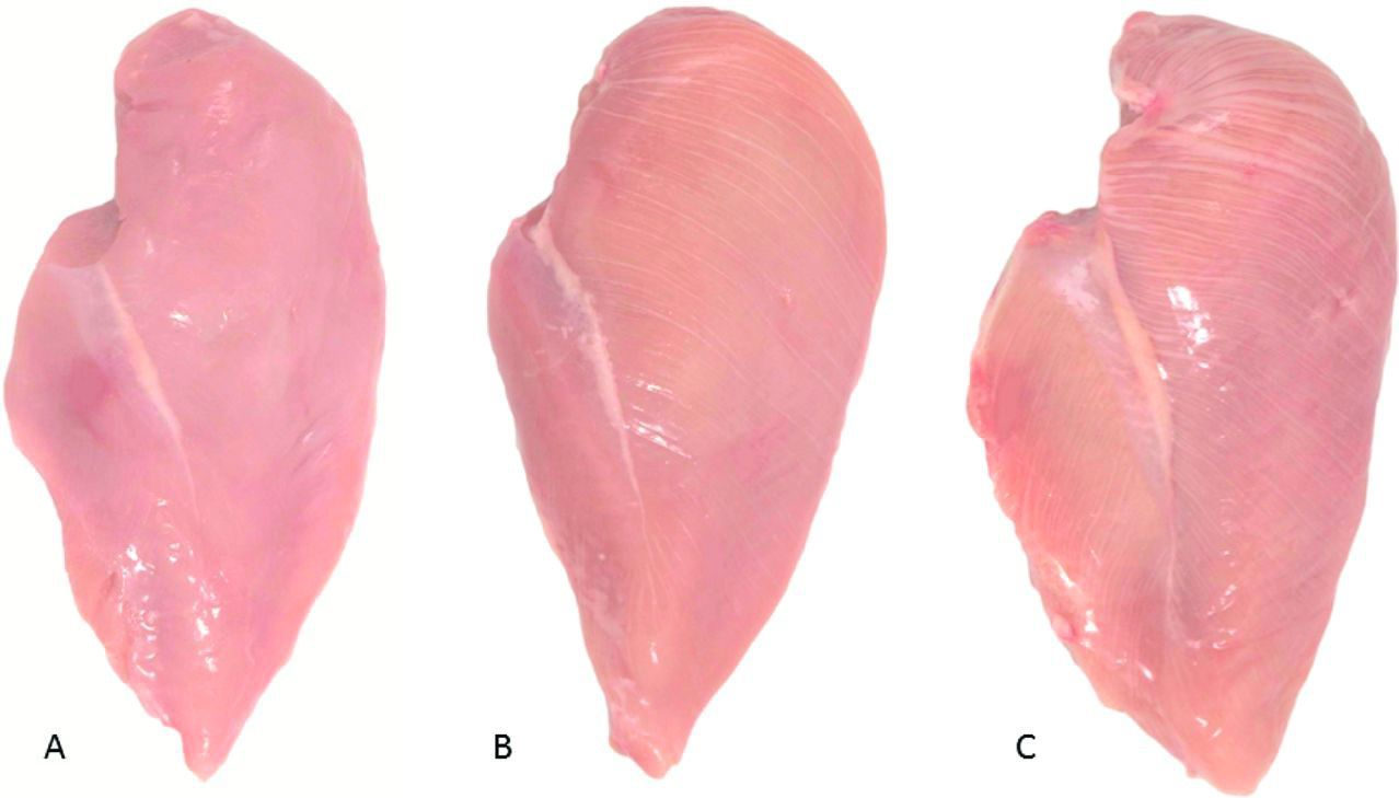 Image result for white stripes on chicken