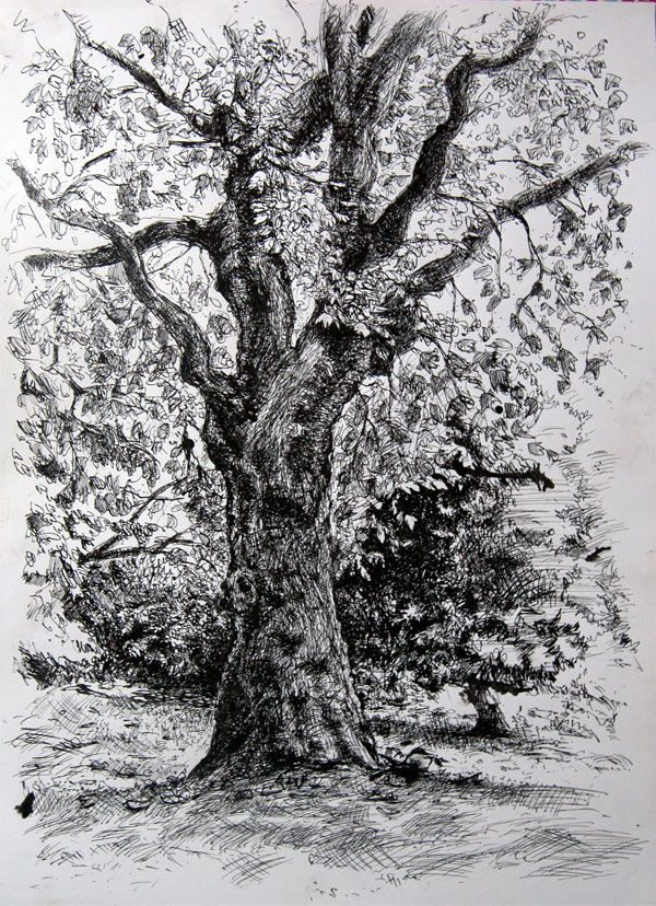 pen and ink tree drawings pen and ink drawing of a tree in battersea