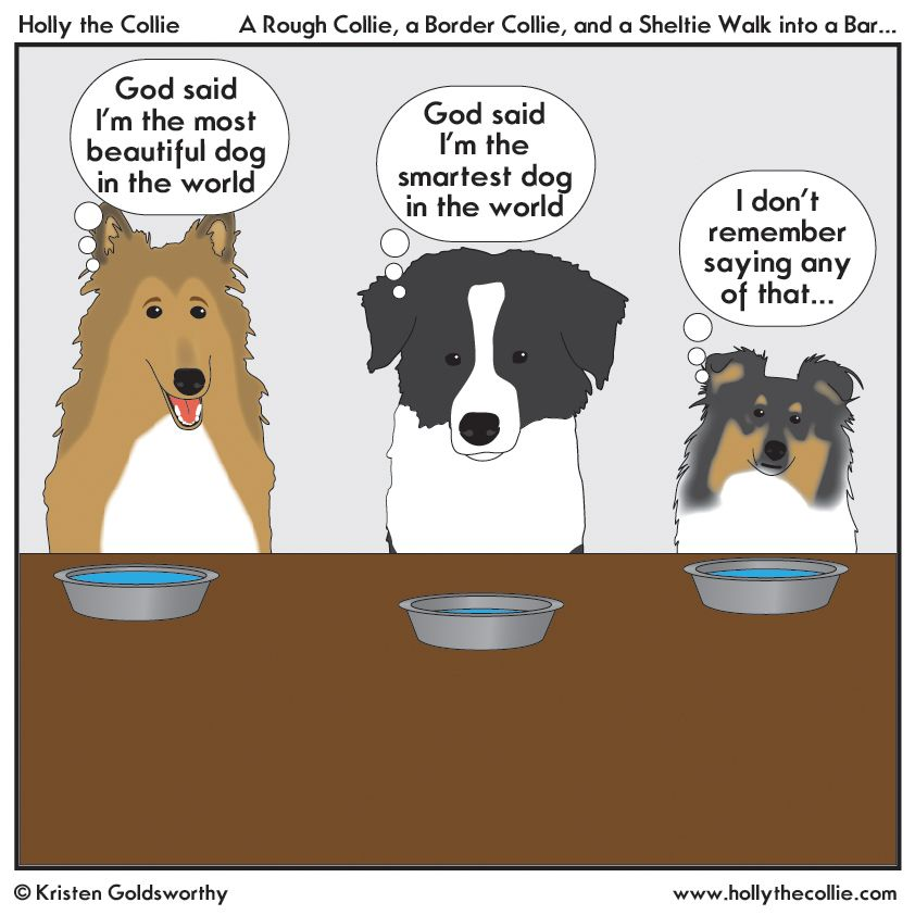 I Saw This Joke On A Collie Group Earlier In The Week And Just Had To Put A Holly Spin On It I Ve Never Had A Shelti Shetland Sheepdog Collie Dog
