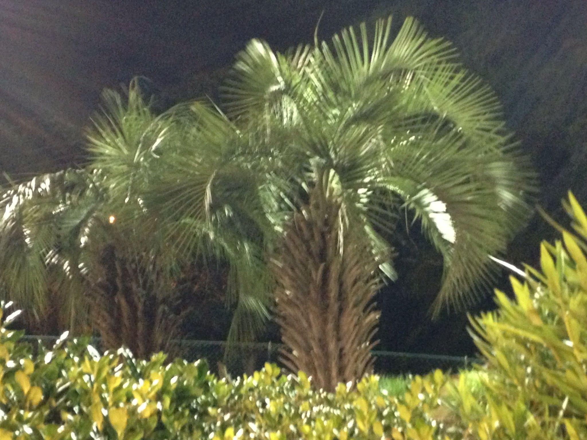 Myrtle Beach: Palm Trees - News - Bubblews