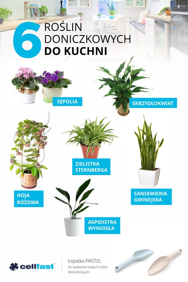6 Roslin Doniczkowych Do Kuchni Kwiaty Doniczkowe Do Kuchni Narzedzia Ogrodowe Cellfast Cool Plants Trees To Plant Planting Flowers