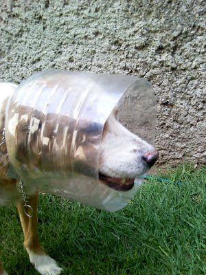 Tipos De Collares De Castigo Para Perros Pin De Laura Vargas En Vete En 2020 Collar Isabelino Collar