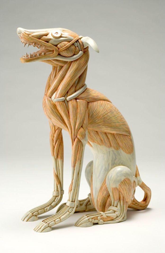 Pin von Alex Ferreiro auf Sculpture | Pinterest | Anatomie hund ...