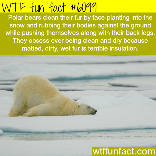 Épinglé par funnystarboy sur funny cool | Fun facts, Wtf ...