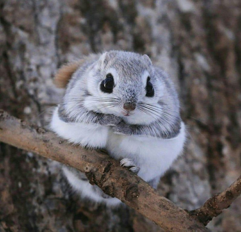 Japanese Dwarf Squirrels Looks Like They Made It Into Reality From