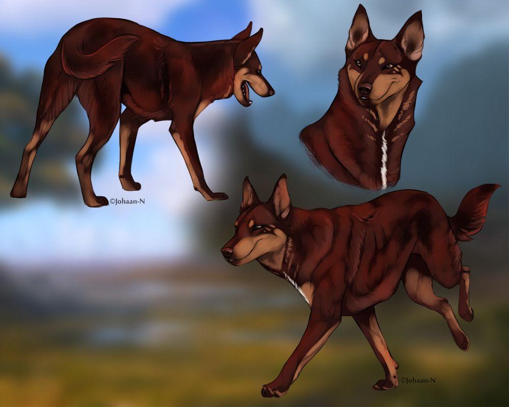 Dog Canine Canine Drawing Dog Art Dog Drawing