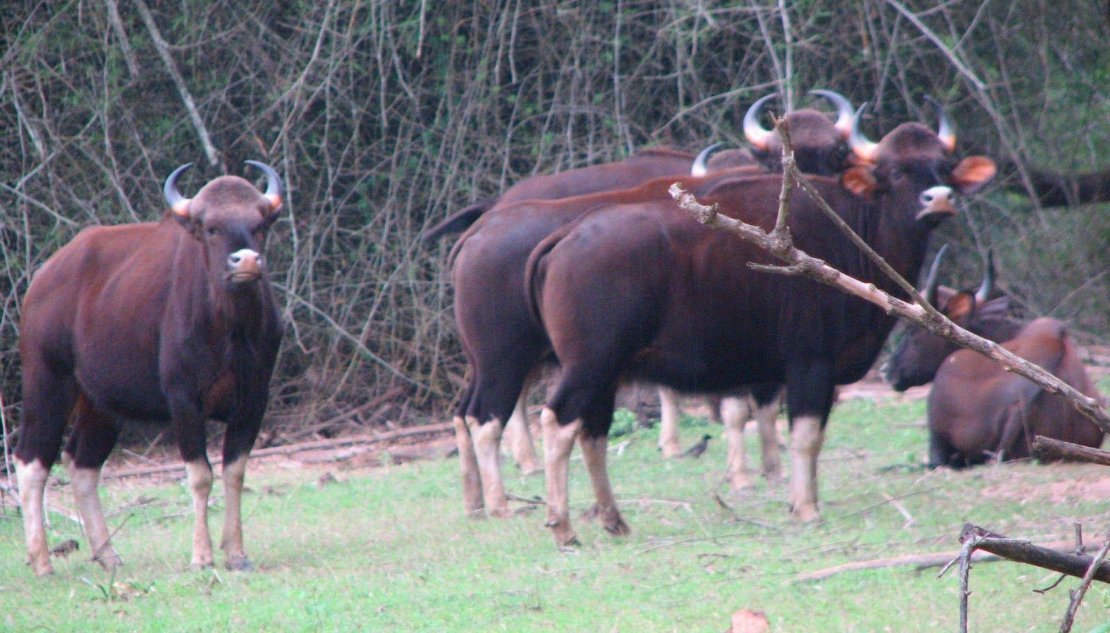 Indian+Rainforest+Animals AN INDIAN HANDYCAM INDIAN