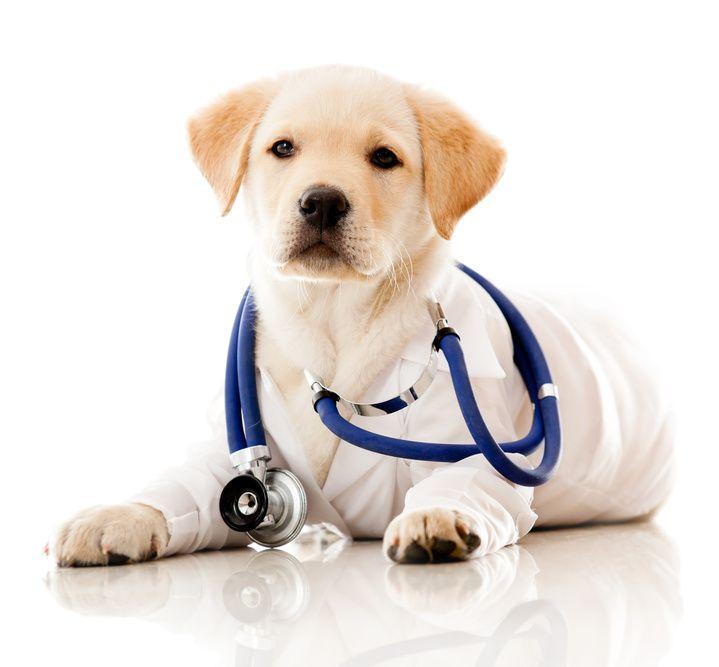 Pin On Animal Health Care