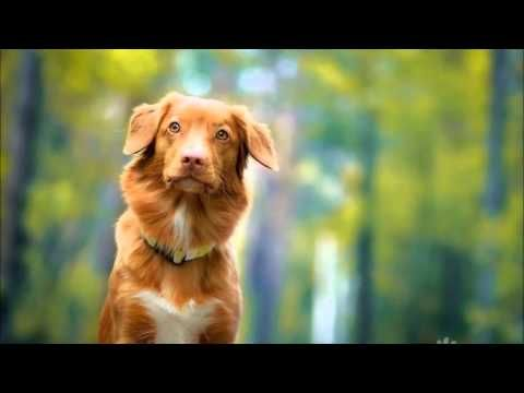 Abraham Hicks: Now I am a new person - YouTube