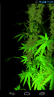 Weed 3D Live Wallpaper Weed, Wallpaper Downloads, Free Live Wallpapers, App Play,