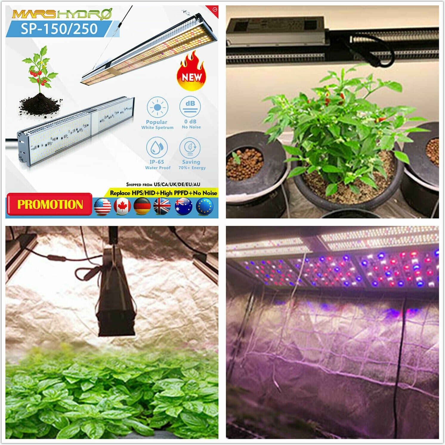 Beautiful Grow Lights For Bonsai Tree Images Bonsai Gallery Bonsai Tree Grow Lights Bonsai