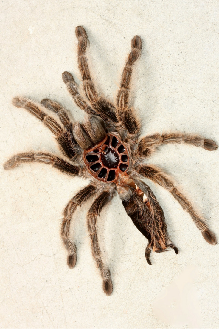 Fascinated by spiders? Click to learn about different types of ...
