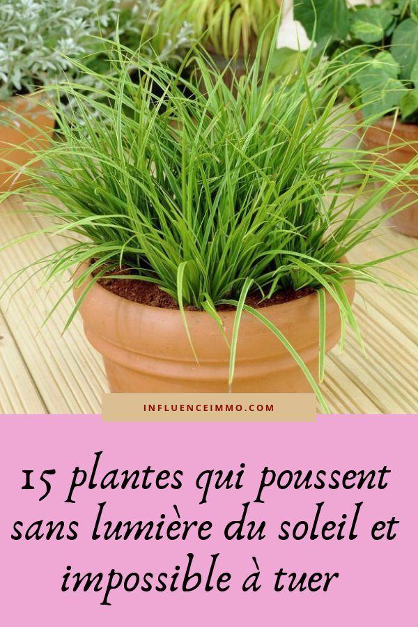 Les 15 Meilleures Plantes Qui Poussent Sans Lumiere Astuce