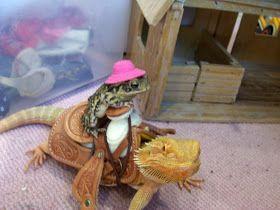 Photo of Zoofari Reptiles: Funny Pictures