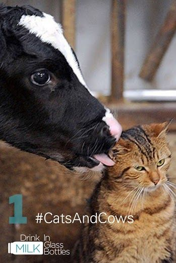 40+ Cats and cows yoga ideas