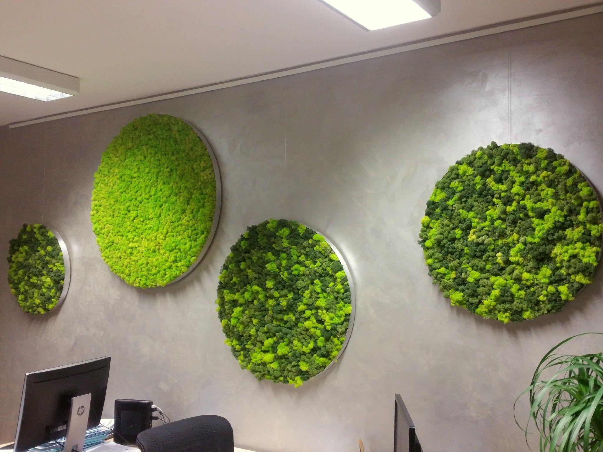 Runde moosbilder mit alurahmen und islandmoos elements erde haus moss wall wall und plants - Vertikaler garten innenraum ...