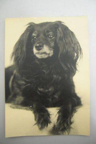 Burgdorf – Nachdenklicher Hund - Photo ca. 1937