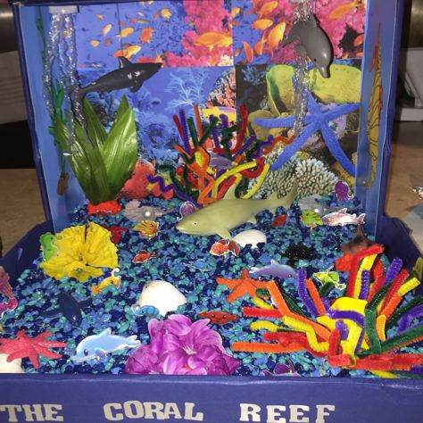 Coral reef ecosystem shoebox project crafts pinterest coral coral reef ecosystem shoebox project sciox Image collections