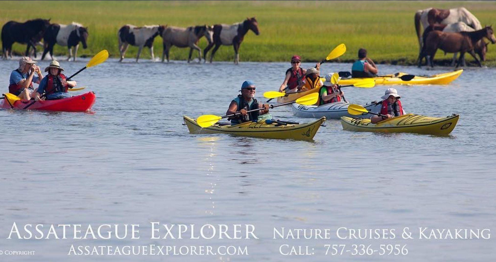 Assateague explorer kayak tours depart from 7470