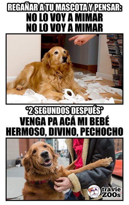 Perros Graciosos Http Enviarpostales Es Perros Graciosos 160 Perros Animales Funny Spanish Memes Animal Memes Dog Memes