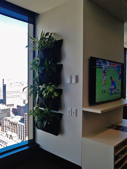 You can have a green wall, even in a small space. Put one in your office today and your employees and clients will love it!